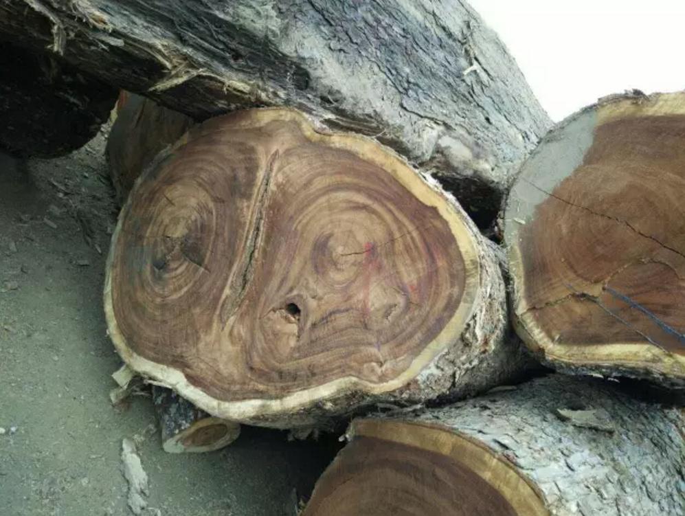 雨树木头.png